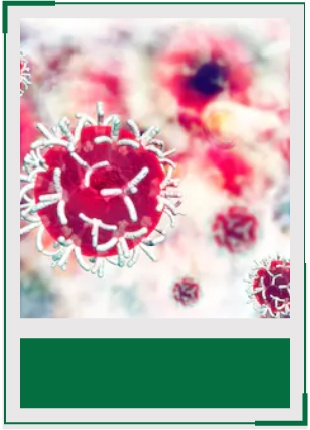 AcceGen tumor cell lines product list