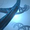 AcceGen MicroRNA Sponge Service