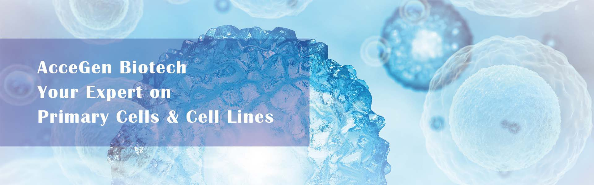 AcceGen, your expert on primary cells & cell lines, potent and pure human & animal primary cell product list.