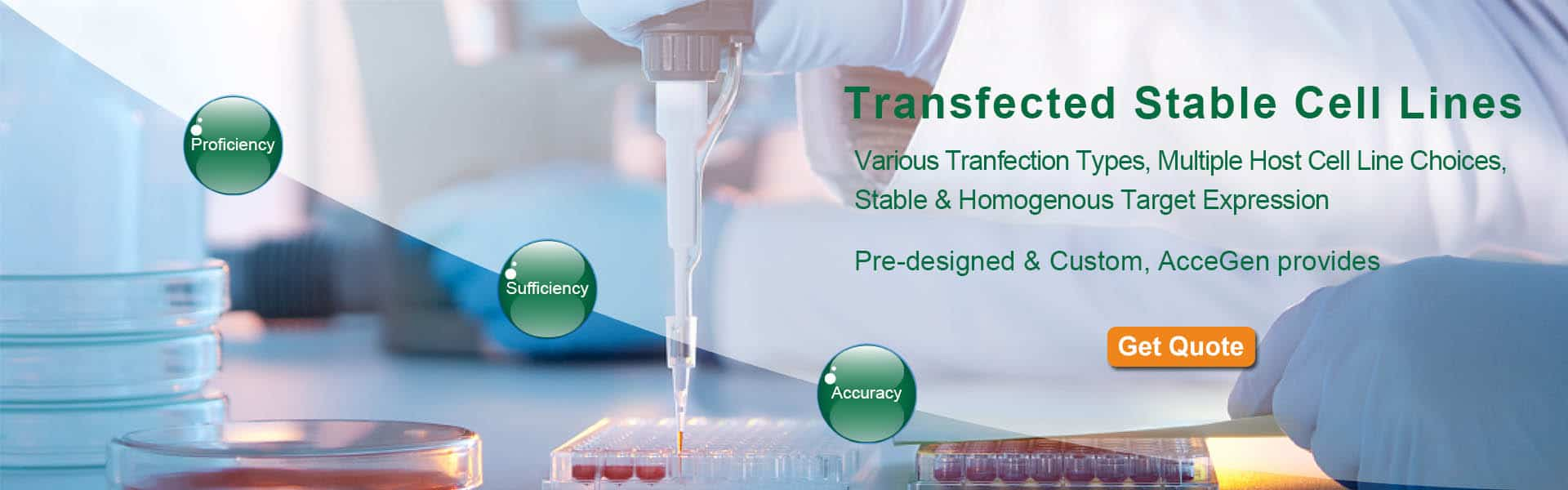 AcceGen Transfected Stable Cell Lines
